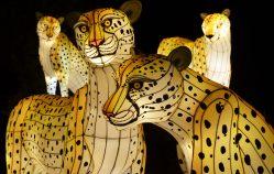 Cheetahs_Web-e1497895311343