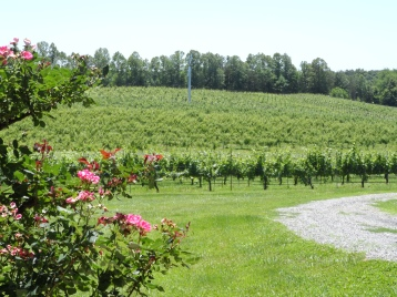 Round Peak Vineyards & Roses
