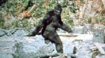 bigfoot-film-patterson-gimlin
