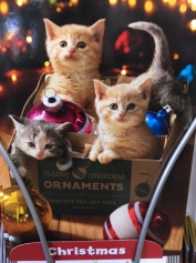 Animal/Pet Themed Christmas Card