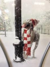 Animal/Pet Themed Christmas Card