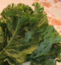 Kale - Red Barn Market-Correll Farms- Rowan County NC