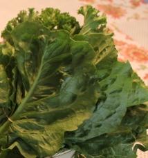 Kale - Red Barn Market-Correll Farms- Rowan County NC