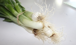 Spring Onions - Red Barn Market - Correll Farms - Rowan County NC