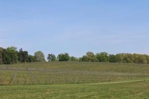 jones von drehle estate wines grape fields